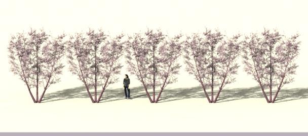 5trees-uiniform.jpg