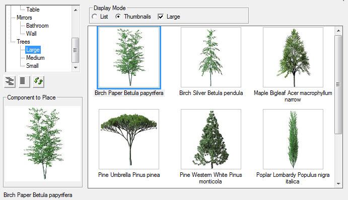 Large Trees.jpg
