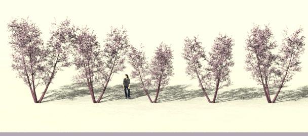 5trees-random.jpg