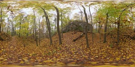 Autumn Forest 01.jpg