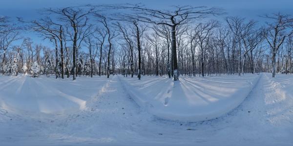 Snowy forest path 02.jpg